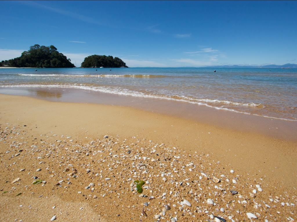 Beach-south-island-New-Zealand.jpg