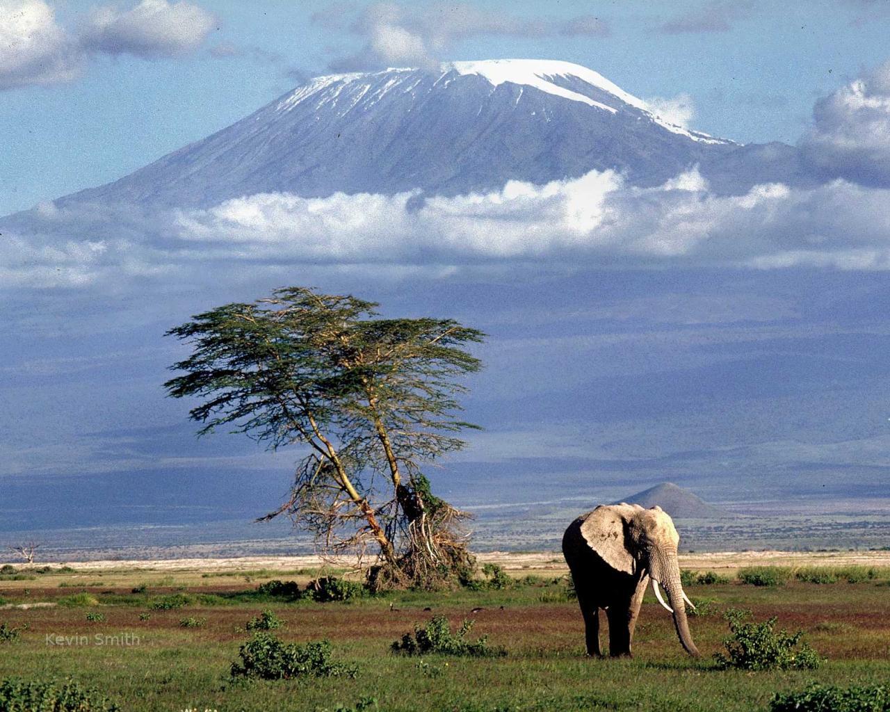 Kilimanjaro-mountain.jpg