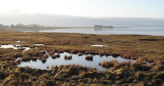 Salt_marsh,_Aberlady_Bay_-_geograph.org.uk_-_1079786.jpg