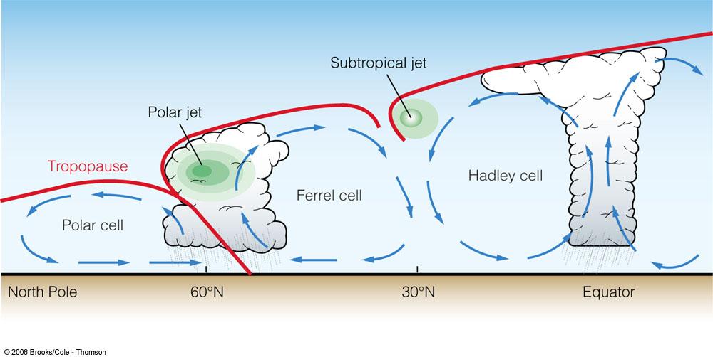 cell cross section.jpg
