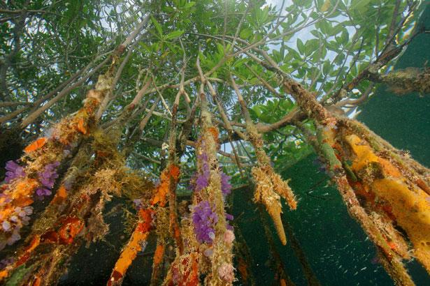 mangroves-615.jpg